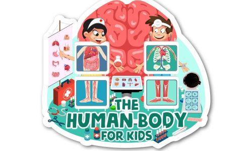Human body for kids logo